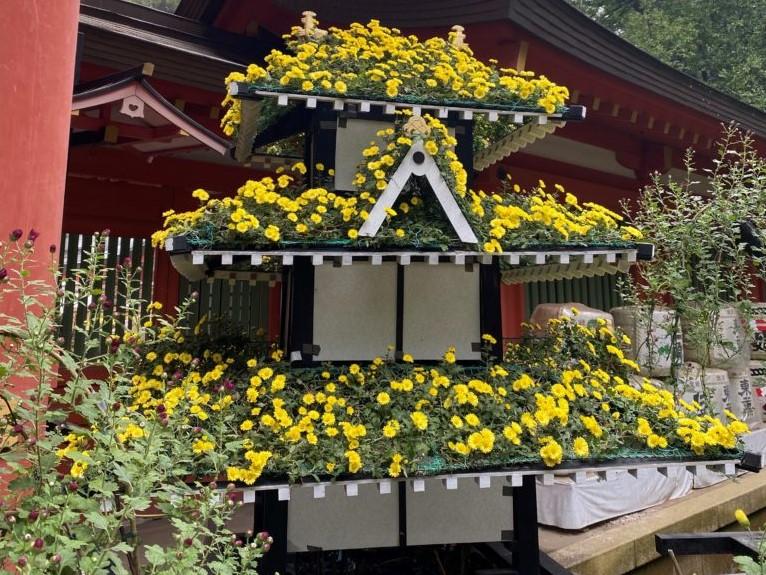 香取神宮 菊